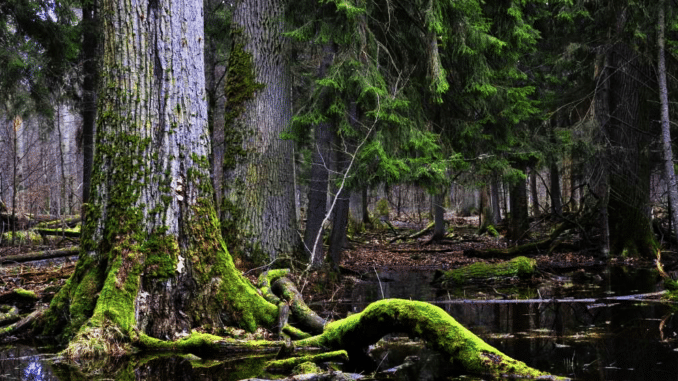 racine arbre forêt